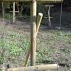 lampone-particolare-struttura-piolo