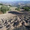 preparazione-terreno-nocciolteo-baiso